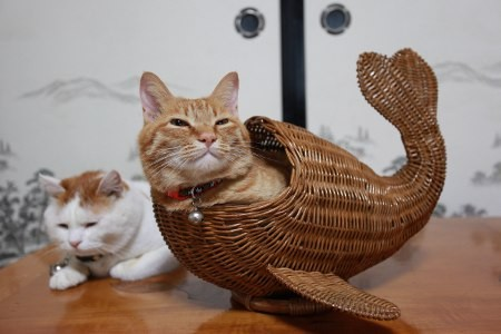 Gatos flexíveis quem cabem em qualquer lugar (17)