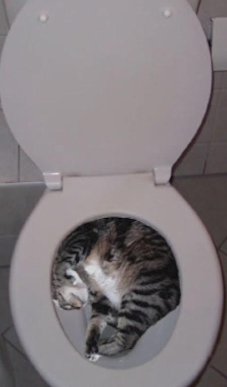 Gatos flexíveis quem cabem em qualquer lugar (18)