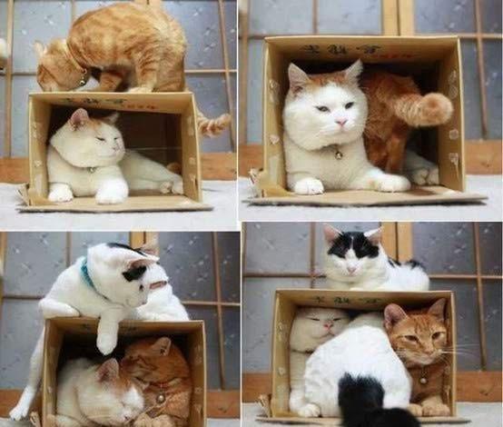 Gatos flexíveis quem cabem em qualquer lugar (25)
