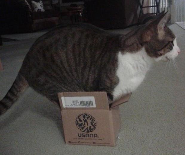 Gatos flexíveis quem cabem em qualquer lugar (26)