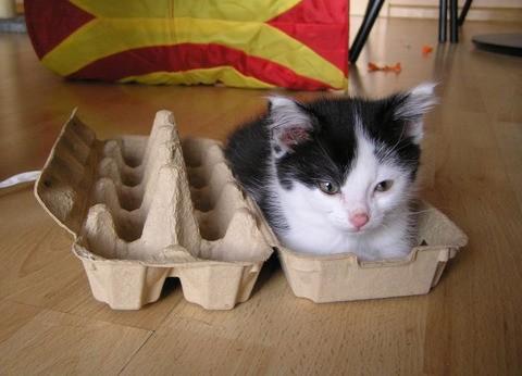 Gatos flexíveis quem cabem em qualquer lugar (27)