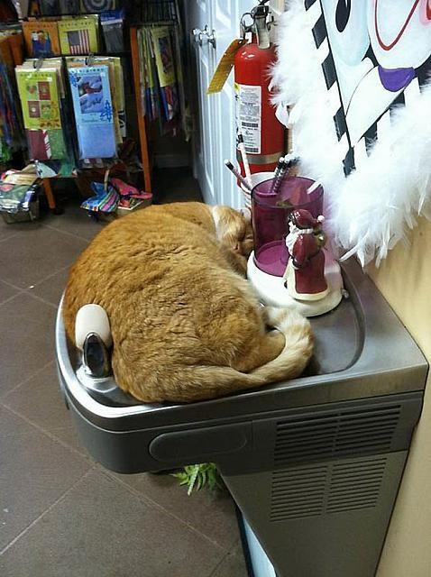 Gatos flexíveis quem cabem em qualquer lugar (28)