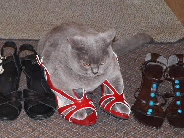 Gatos flexíveis quem cabem em qualquer lugar (31)