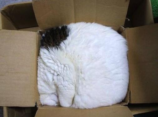 Gatos flexíveis quem cabem em qualquer lugar (5)