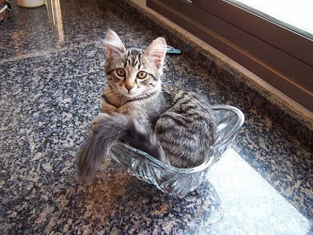 Gatos flexíveis quem cabem em qualquer lugar (6)