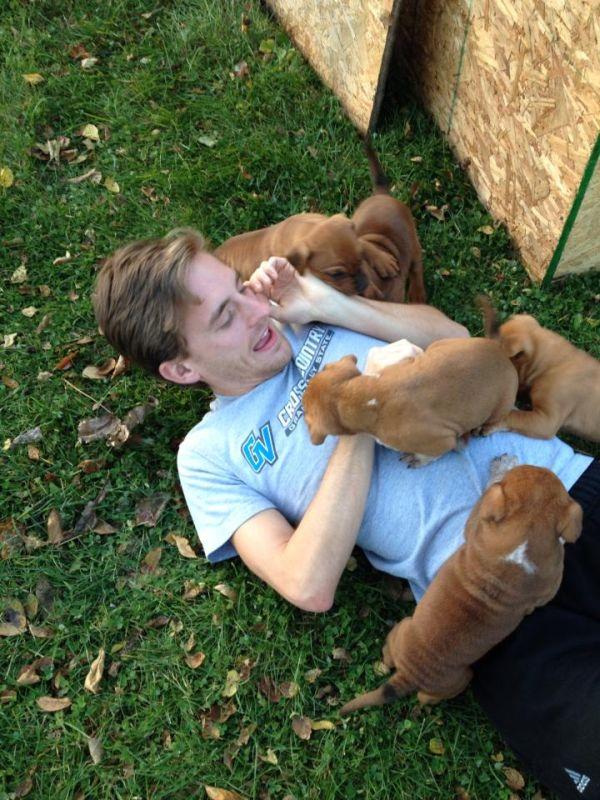 Quando cachorros atacam (2)