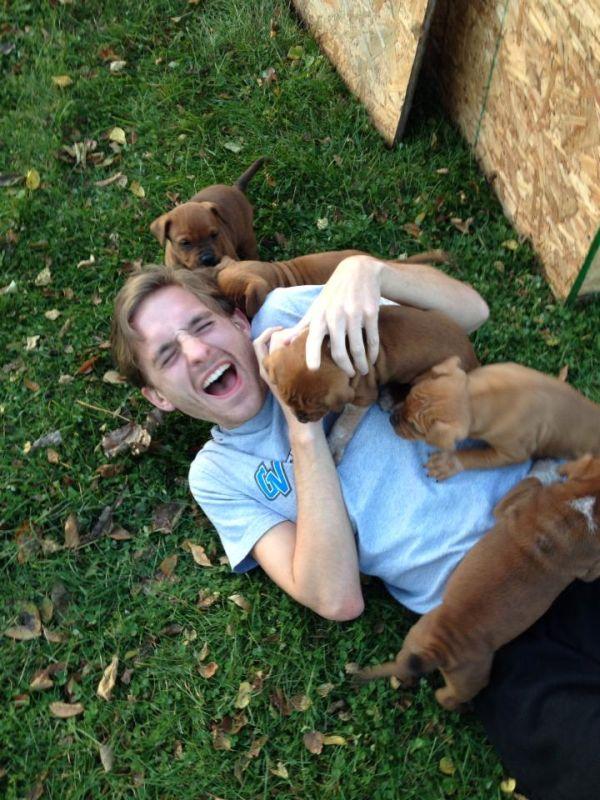 Quando cachorros atacam (4)
