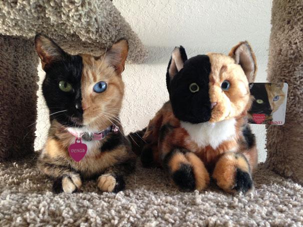 Venus, o gato de duas caras (4)