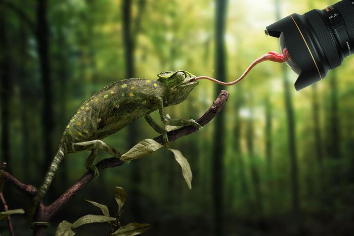 Animais mostrando a língua (10)