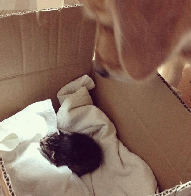 Cachorro adota gatinho rejeitado pela mãe (1)