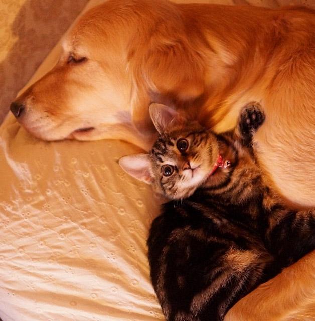 Cachorro-adota-gatinho-rejeitado-pela-mãe (10)