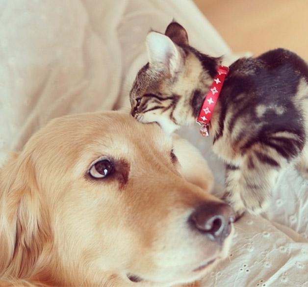 Cachorro-adota-gatinho-rejeitado-pela-mãe (12)