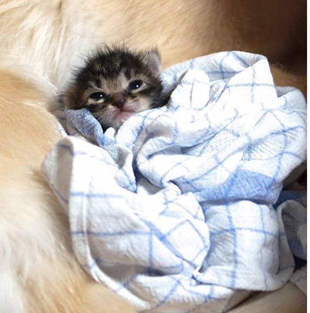 Cachorro adota gatinho rejeitado pela mãe (2)