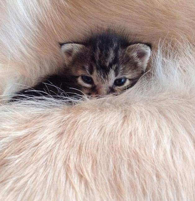 Cachorro-adota-gatinho-rejeitado-pela-mãe (3)