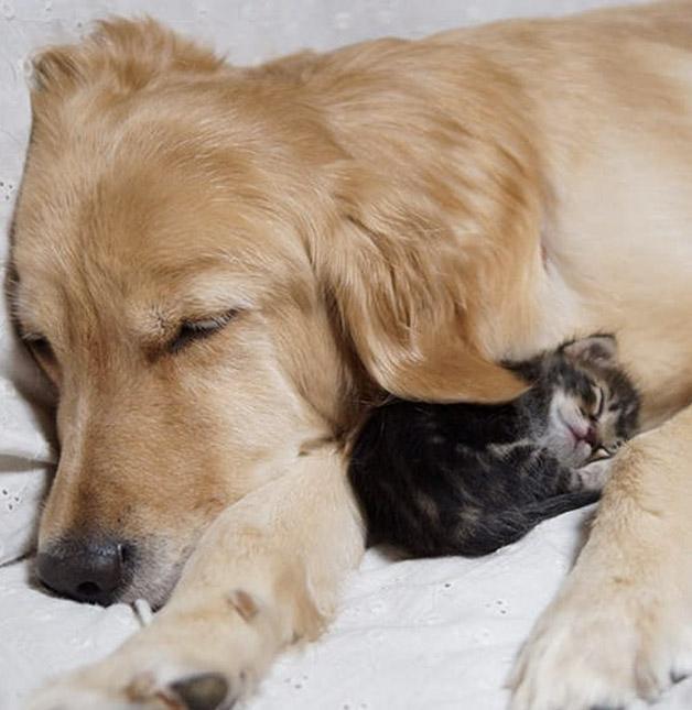 Cachorro-adota-gatinho-rejeitado-pela-mãe (4)