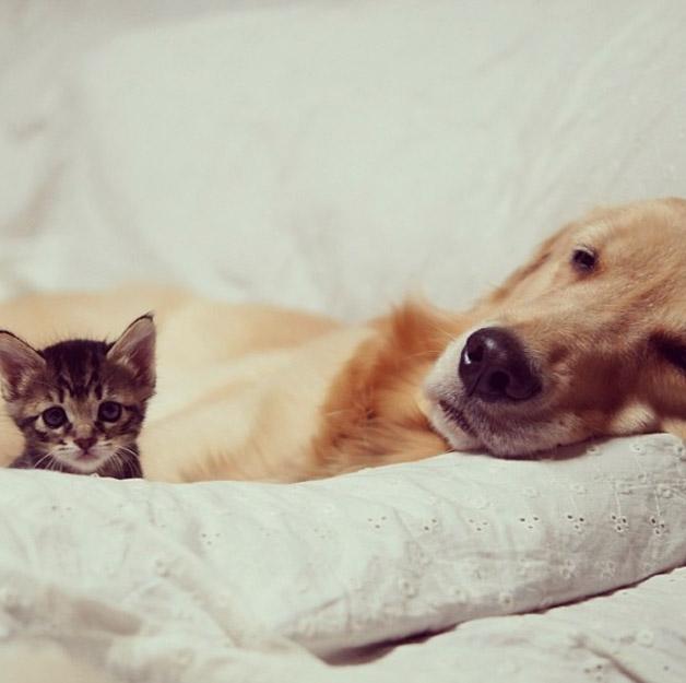 Cachorro-adota-gatinho-rejeitado-pela-mãe (5)