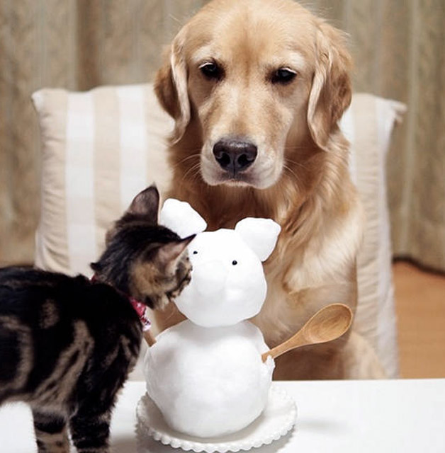 Cachorro-adota-gatinho-rejeitado-pela-mãe (8)