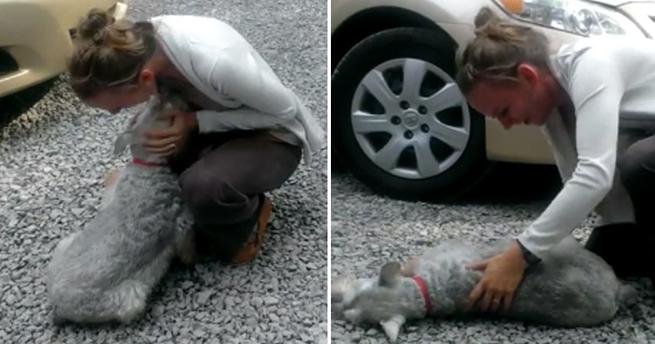 Cachorro desmaia ao reencontrar dona depois de 2 anos
