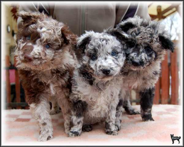 Cachorros-diferentes-por-suas-marcas-inusitadas-no-corpo (9)