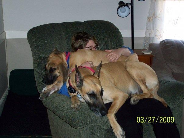 Cães-grandes-que-pensam-que-são-pequenos-para-ficarem-no-Colo-Blog-Animal (1)