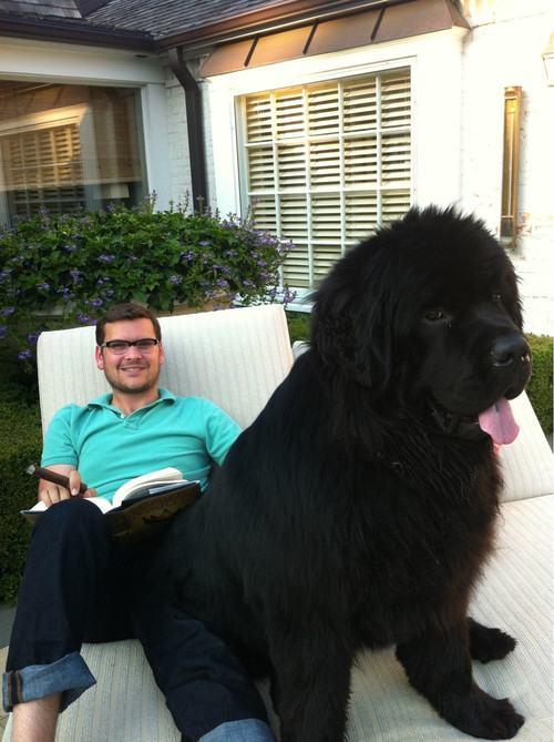 Cães-grandes-que-pensam-que-são-pequenos-para-ficarem-no-Colo-Blog-Animal (14)
