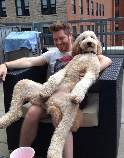 Cães-grandes-que-pensam-que-são-pequenos-para-ficarem-no-Colo-Blog-Animal (15)