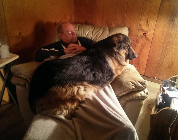 Cães-grandes-que-pensam-que-são-pequenos-para-ficarem-no-Colo-Blog-Animal (18)