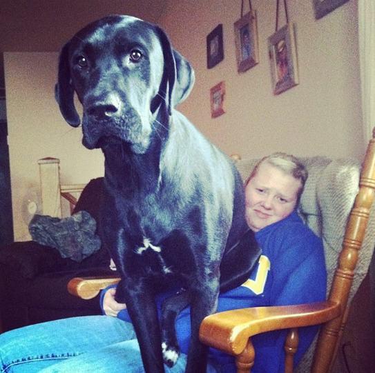 Cães-grandes-que-pensam-que-são-pequenos-para-ficarem-no-Colo-Blog-Animal (3)