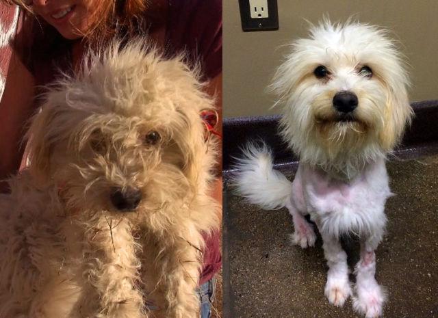 Cães resgatados - Antes e Depois (11)