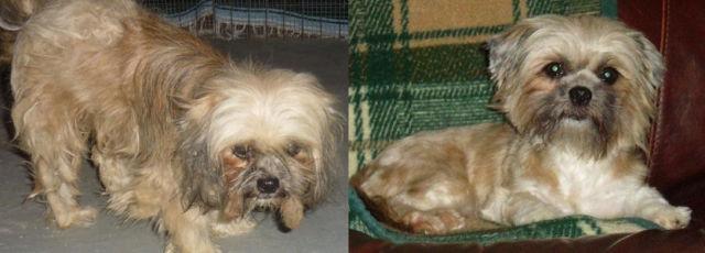 Cães resgatados - Antes e Depois (21)