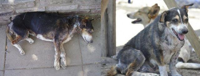 Cães resgatados - Antes e Depois (22)
