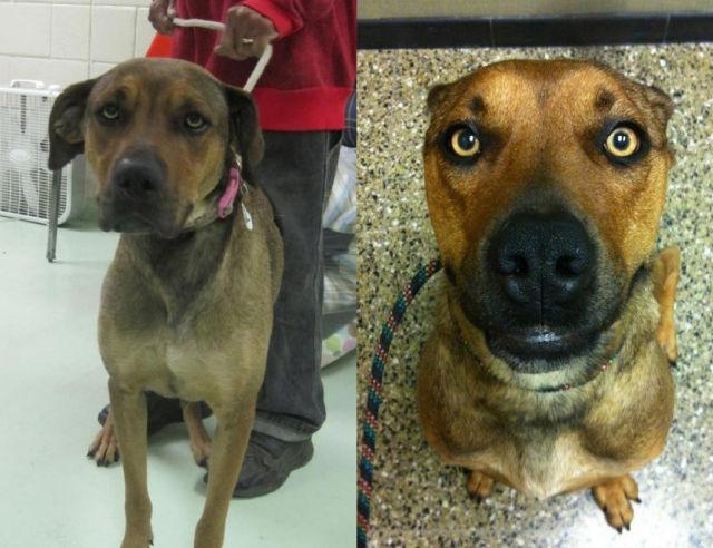 Cães resgatados - Antes e Depois (24)