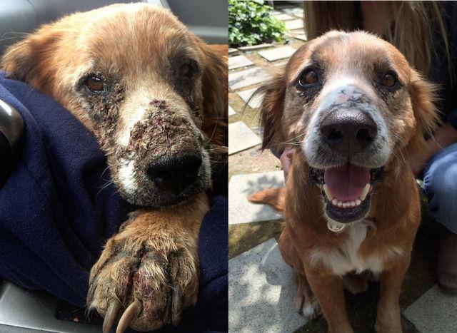 Cães resgatados - Antes e Depois (25)