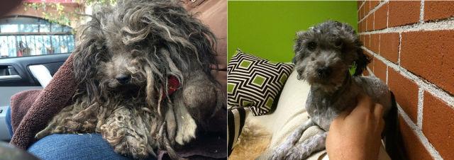 Cães resgatados - Antes e Depois (4)