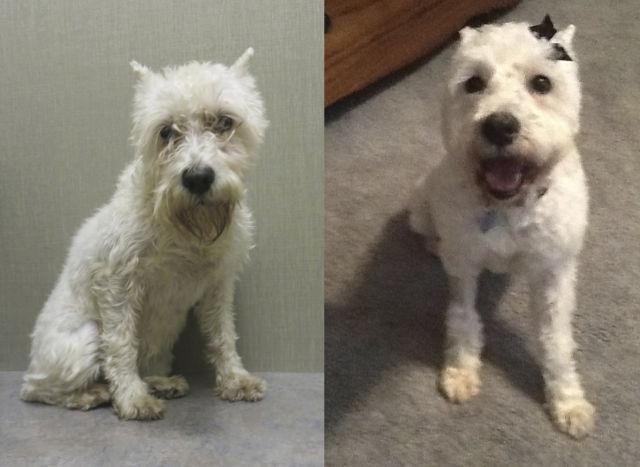 Cães resgatados - Antes e Depois (6)
