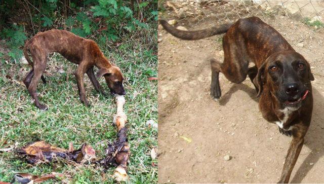 Cães resgatados - Antes e Depois (7)