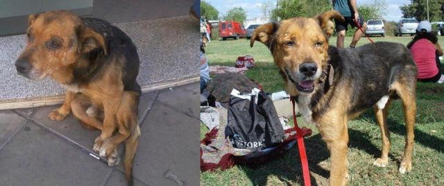 Cães resgatados - Antes e Depois (8)