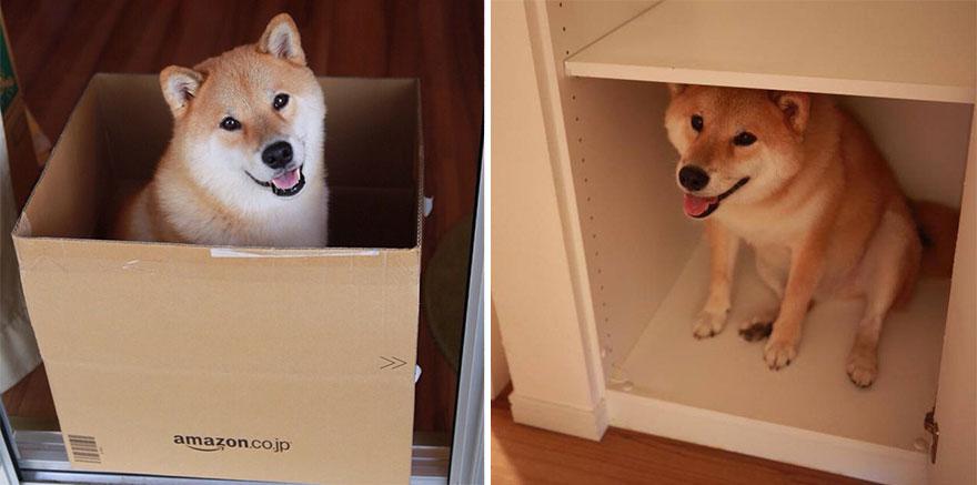 Conheça Maru, o cão mais sorridente do mundo (16)