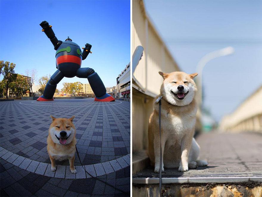 Conheça Maru, o cão mais sorridente do mundo (17)