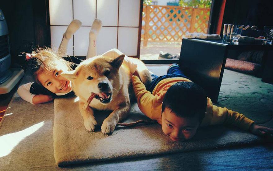 Conheça Maru, o cão mais sorridente do mundo (6)