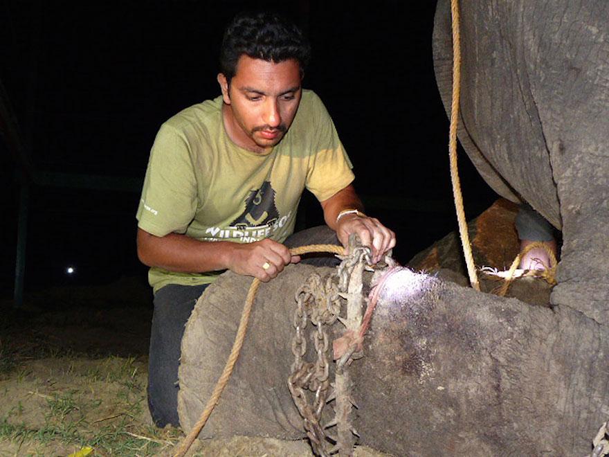 Elefante-chora-de-alegria-ao-ser-resgatado-após-50-anos-de-cativeiro  (13)