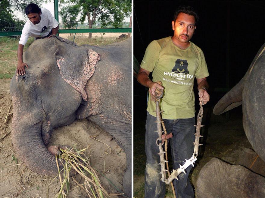 Elefante-chora-de-alegria-ao-ser-resgatado-após-50-anos-de-cativeiro  (14)