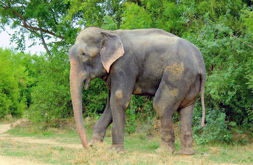 Elefante-chora-de-alegria-ao-ser-resgatado-após-50-anos-de-cativeiro  (7)