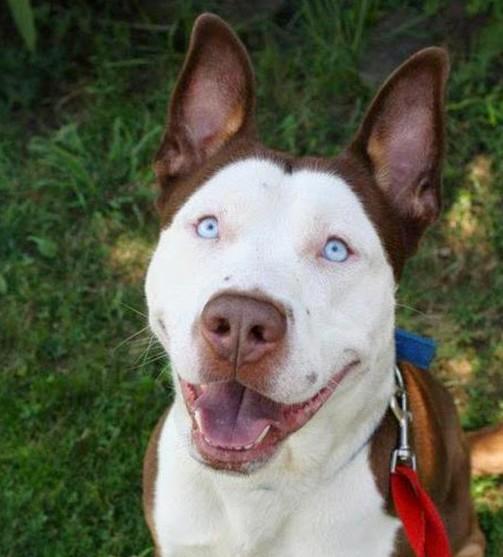 Fantásticos-cruzamentos-entre-raças-de-cães-Blog-Animal (1)
