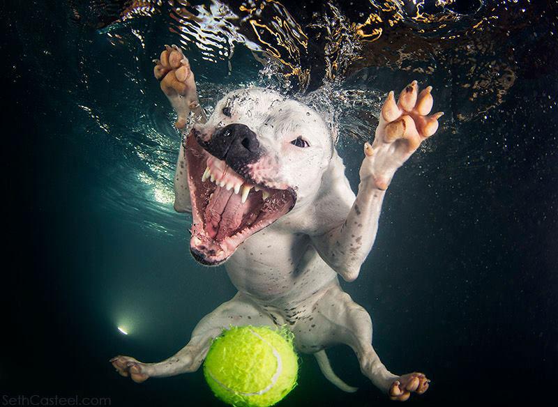 Fotos de cães buscando bolas debaixo d'água (10)