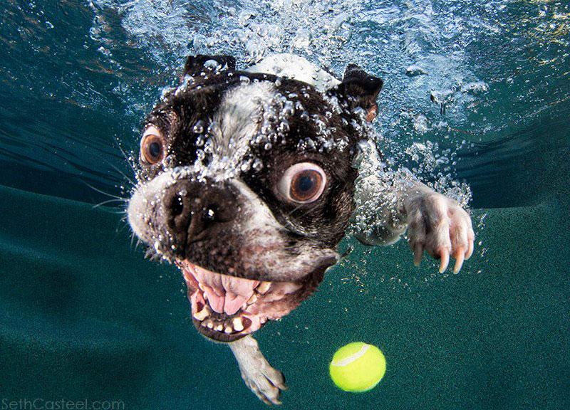 Fotos de cães buscando bolas debaixo d'água (3)