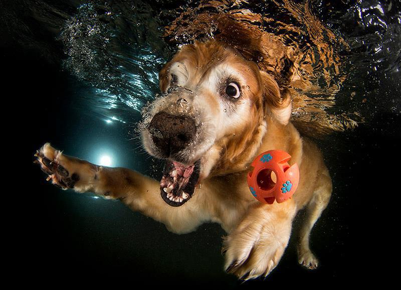 Fotos de cães buscando bolas debaixo d'água (4)