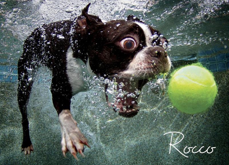 Fotos de cães buscando bolas debaixo d'água (5)