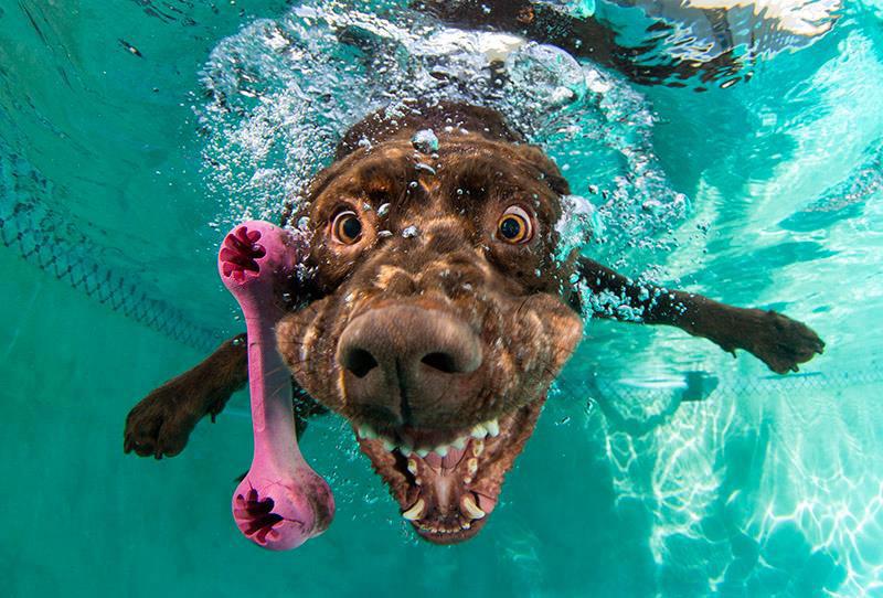 Fotos de cães buscando bolas debaixo d'água (7)
