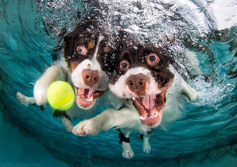 Fotos de cães buscando bolas debaixo d'água (8)